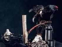 ?quipement et trophys de chasseurs sur une table Photo de studio sur un fond fonc? de mur images stock