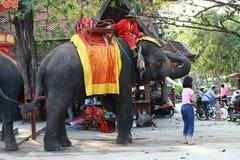 Équipez les touristes de attente pour monter sur l'éléphant Image libre de droits