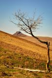 Quirky Tree in the Middle of the Hills of Auvergne Royalty Free Stock Photo