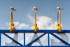 Quirky view of three seagulls on matching lights Stock Photos