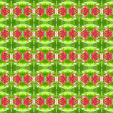 Quisqualis Indica oder Rangun-Kriechpflanze nahtlos vektor abbildung