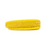 Quitando la semilla del maíz aislada en blanco Imagen de archivo libre de regalías