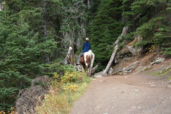 Équitation Image libre de droits