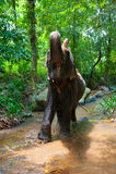 Équitation de femme sur un éléphant Photo stock