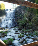 Quite a catch - spider web. A spider's web backlit by this gorgeous setting Stock Photography