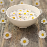 Quite contrary. Daisies in essential essense - aromatherapy/aternative therapy concept - shallow dof royalty free stock photography