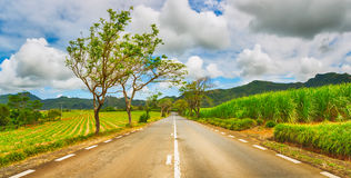 Quite road among green hills landscape, Mauritius. Panorama stock image