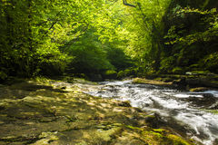 Quite Stream in a Crisp Green Forest Stock Image