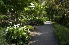Quite summer garden Stock Image