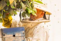 QUITO, ECUADOR, MÄRZ, 21, 2018: Ansicht im Freien des Imkers Honig auf einer Bienenwabe und Bienen, Tragen sammelnd ein volles Lizenzfreie Stockfotos
