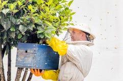 QUITO, ECUADOR, MARZO, 21, 2018: Opinión al aire libre el apicultor que recoge la miel en un panal y las abejas, el llevar un lle Fotos de archivo libres de regalías