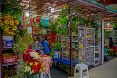 QUITO, ECUADOR - NOVEMBER 23, 2016: A flower market with some naturist medicine at the municipal market located in San. Francisco in Quito city stock images