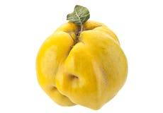 Quittenfruchtnahaufnahme Stockfotos