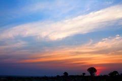 Quiver bomensilhouetten op de heldere achtergrond van de zonsonderganghemel, prachtig Afrikaans landschap in Keetmanshoop, Namibi royalty-vrije stock afbeeldingen