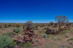 Quiver boom of kokerboom bos en de grond van reuzensporten dichtbij Keetmanshoop, Namibië stock afbeelding