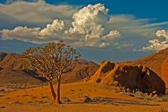 Quiver boom met onweerswolken royalty-vrije stock afbeelding