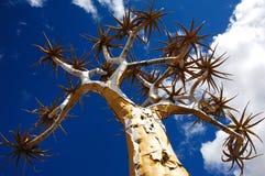 Quiver Tree (Aloe dichotoma). Abstract view of a Quiver Trees treetop (Aloe dichotoma) in Giants Playground near Keetmanshoop (Namibia Stock Image