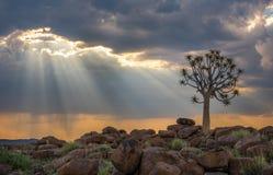 The quiver tree, or aloe dichotoma, Keetmanshoop, Namibia Royalty Free Stock Photos