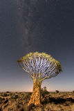 Quiver Tree Forest - Nambia Royalty Free Stock Photo
