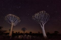 Quiver Tree Forest in Southern Namibia taken in January 2018 royalty free stock photo