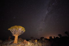 Quiver Tree Forest under the milky way Stock Photos