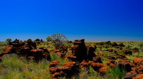 Quiver tree or kokerboom forest and giants sports ground near Keetmanshoop, Namibia Royalty Free Stock Photo