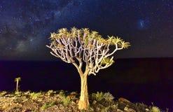 Quiver Tree - Namibia Stock Photo