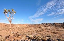 Quiver tree in Richtersveld. Dry desert landscape with quiver tree in Ai-Ais Richtersveld Transfrontier Park in South Africa Stock Image