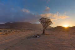 Quiver Tree Sunrise Stock Images