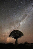 Quiver tree under the Milky Way Royalty Free Stock Photo