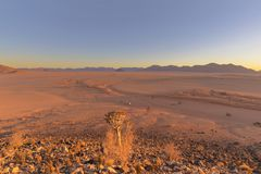 Quiver tree and wide open spaces in the desert. Namibia stock image