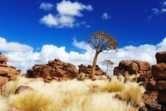 Quiver Trees (Aloe dichotoma). In Giants Playground near Keetmanshoop (Namibia Stock Photos