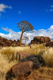 Quiver Trees (Aloe dichotoma). In Giants Playground near Keetmanshoop (Namibia Stock Photos