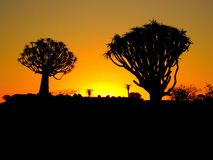 A Namibian sunset set against quiver trees stock image