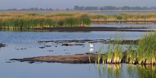 Quivira National Wildlife Refuge Royalty Free Stock Photo