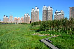 Qunli国家都市沼泽地公园 免版税图库摄影