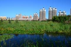 Qunli国家都市沼泽地公园 库存图片