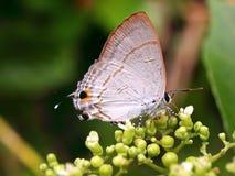 quoc Вьетнам phu острова 20 бабочек Стоковые Фотографии RF
