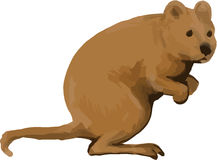 Quokka Side Watercolor Royalty Free Stock Image