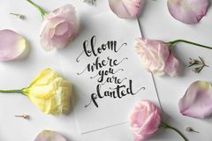 Quote `Bloom where you are planted` written on paper with petals and flowers. Top view stock image