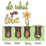 Quote Typographical Background with bulb flowers narcissuses for gardener 'Do what you love'. Stock Photography