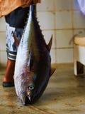 Quriyat-Thunfisch verkauft Stockbild
