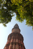 Qutub minar surrounded by leaves Royalty Free Stock Photos