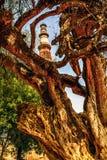 Qutub Minar Tower, Delhi India Royalty Free Stock Photography
