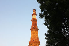 Qutub minar with tree Stock Images