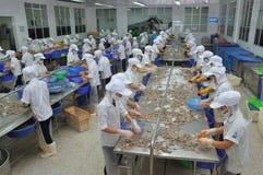 工作者在海鲜工厂剥新鲜的未加工的虾在Quy Nhon市,越南 免版税库存图片