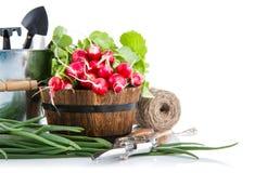 Rábano fresco y cebolla verde con los utensilios de jardinería Imagenes de archivo