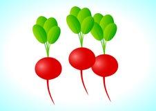 Rábano rojo ilustración del vector