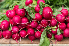 Rábanos orgánicos rojos brillantes Foto de archivo