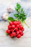 Rábanos y ajo en un fondo ligero Aún vida hermosa de verduras frescas Imágenes de archivo libres de regalías